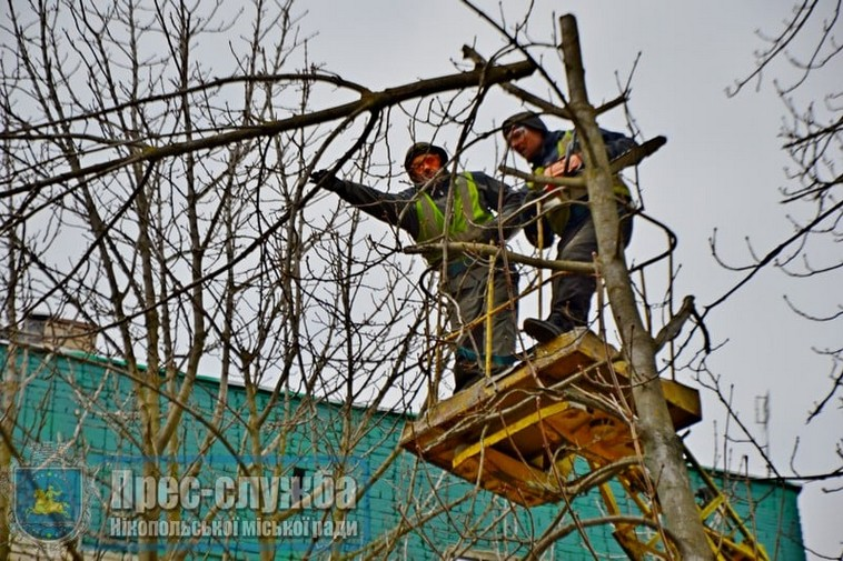 В Никополе до 1 апреля обрежут деревья (фото)