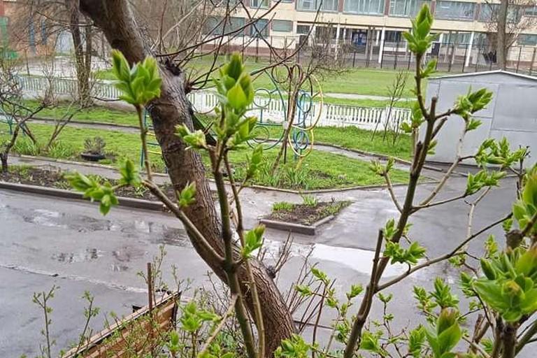Очікуються заморозки: погода у Нікополі на вихідних 17 і 18 квітня