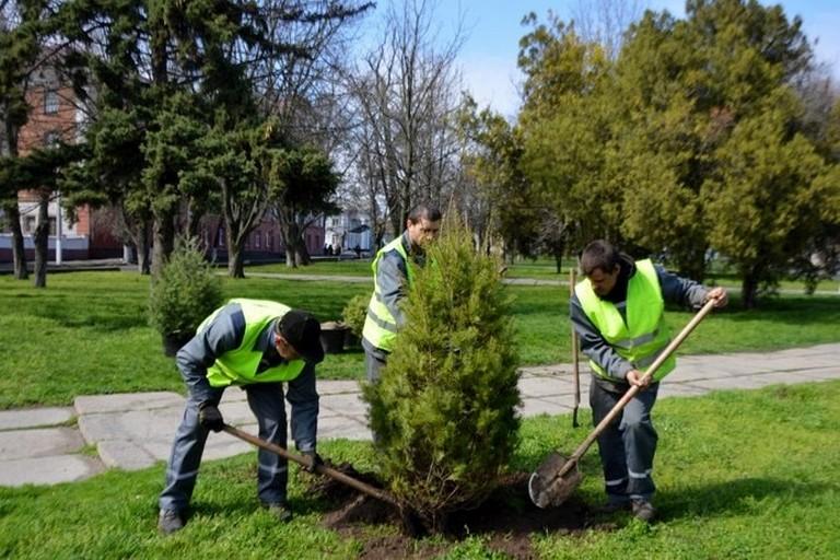 У старій частині Нікополя сьогодні висадили десятки дерев (фото)