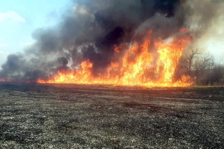 Біля Нікополя вигоріло 3,5 га екосистеми