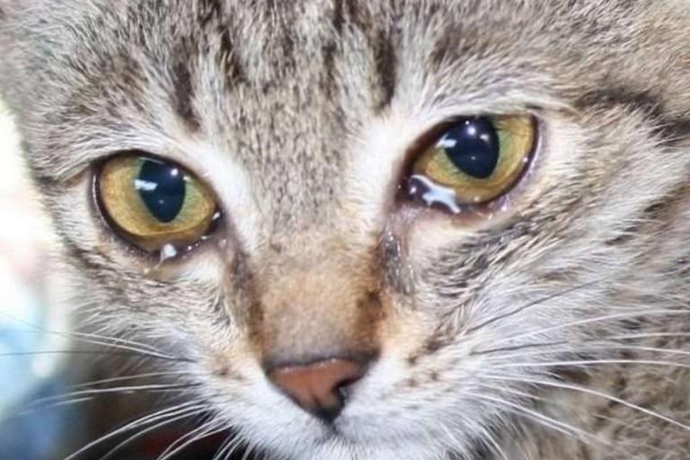 У Нікополі винесли вирок чоловіку, який підстрелив кота